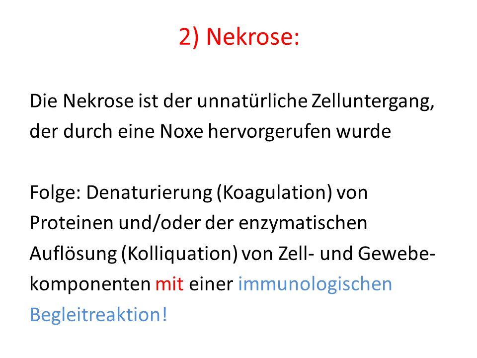 2) Nekrose: Die Nekrose ist der unnatürliche Zelluntergang, der durch eine Noxe hervorgerufen wurde Folge: Denaturierung (Koagulation) von Proteinen u