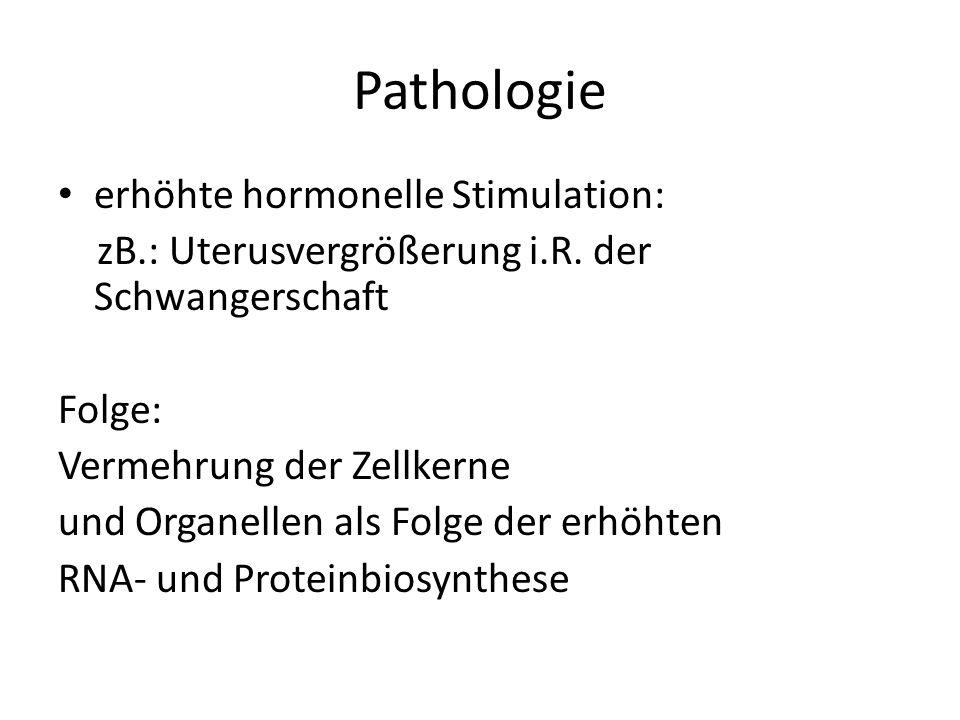 Pathologie erhöhte hormonelle Stimulation: zB.: Uterusvergrößerung i.R. der Schwangerschaft Folge: Vermehrung der Zellkerne und Organellen als Folge d