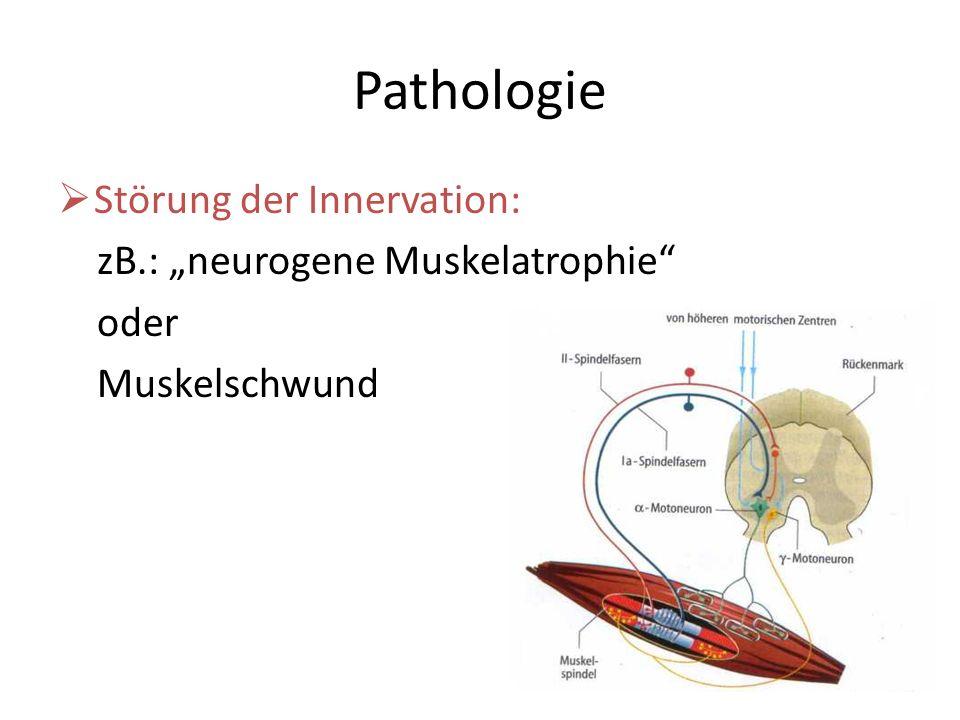 Pathologie Störung der Innervation: zB.: neurogene Muskelatrophie oder Muskelschwund