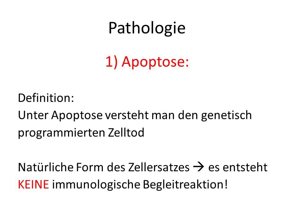 Pathologie 1)Apoptose: Definition: Unter Apoptose versteht man den genetisch programmierten Zelltod Natürliche Form des Zellersatzes es entsteht KEINE