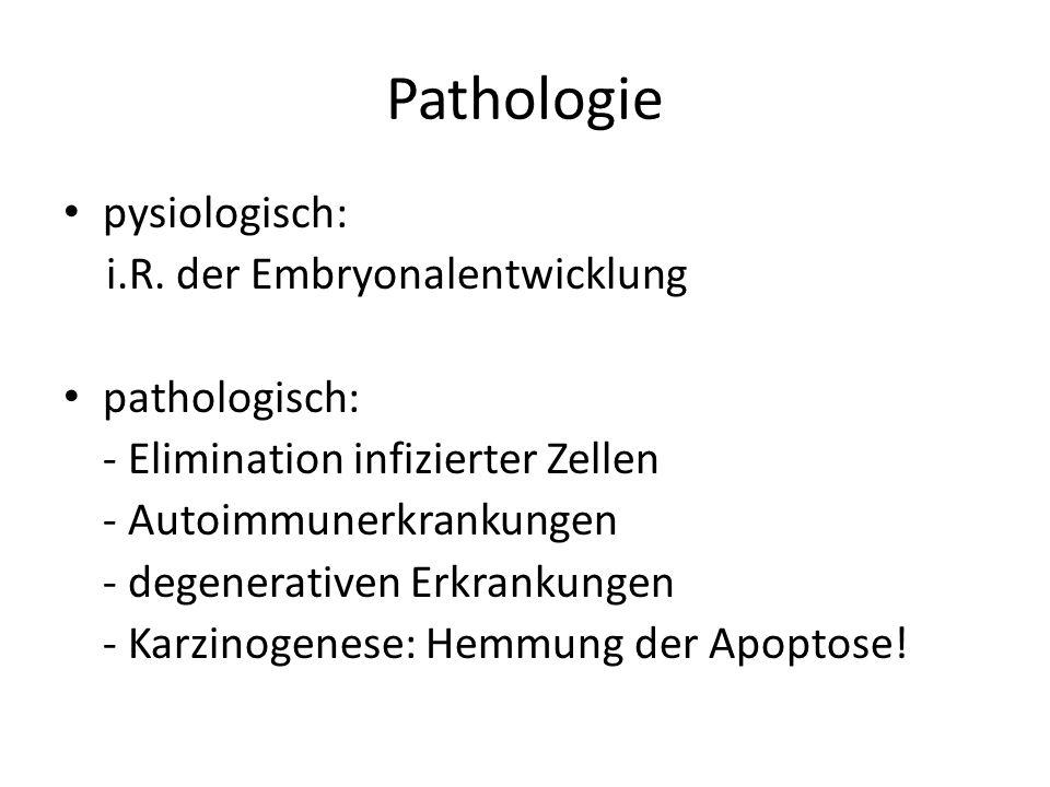 Pathologie pysiologisch: i.R. der Embryonalentwicklung pathologisch: - Elimination infizierter Zellen - Autoimmunerkrankungen - degenerativen Erkranku
