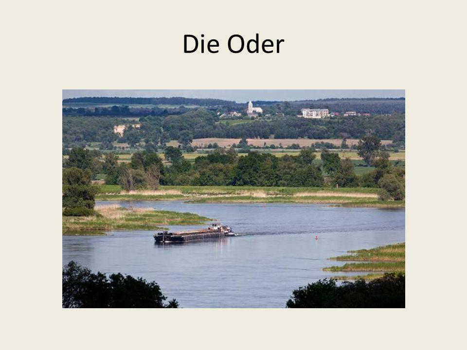 Die Oder