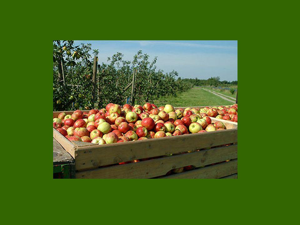 mehr Mehrwert Esse ich den Apfel nicht gleich vom Baum, sondern trage ihn auf den Markt, ist er noch mehr wert.