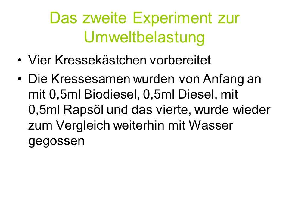 Das zweite Experiment zur Umweltbelastung Vier Kressekästchen vorbereitet Die Kressesamen wurden von Anfang an mit 0,5ml Biodiesel, 0,5ml Diesel, mit