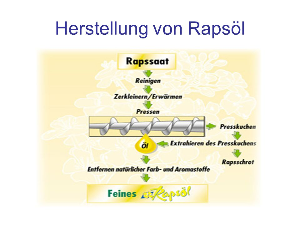 Herstellung von Rapsöl