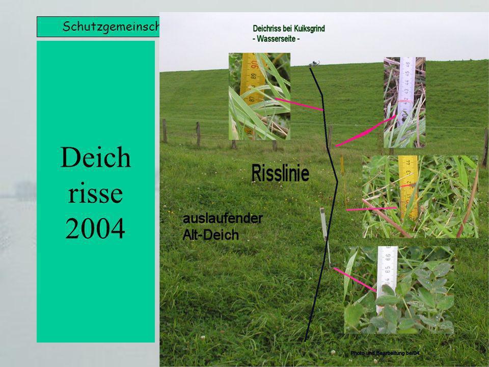Schutzgemeinschaft Bergbaubetroffener (SGB) Rheinberg e.V. Deich risse 2004