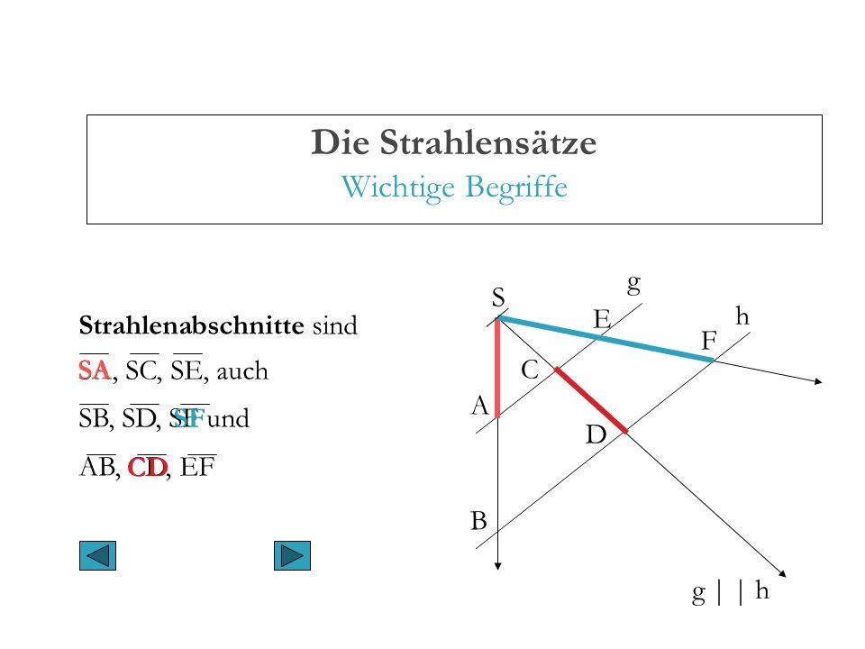 Die Strahlensätze Wichtige Begriffe A B C D E F g | | h g h S Strahlenabschnitte sind SA, SC, SE, auch SB, SD, SF und AB, CD, EF SA CD SF