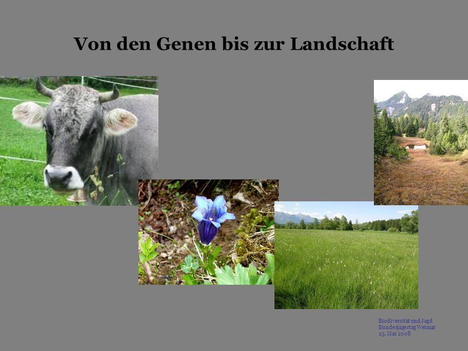 Von den Genen bis zur Landschaft Biodiversität und Jagd Bundesjägertag Weimar 23. Mai 2008
