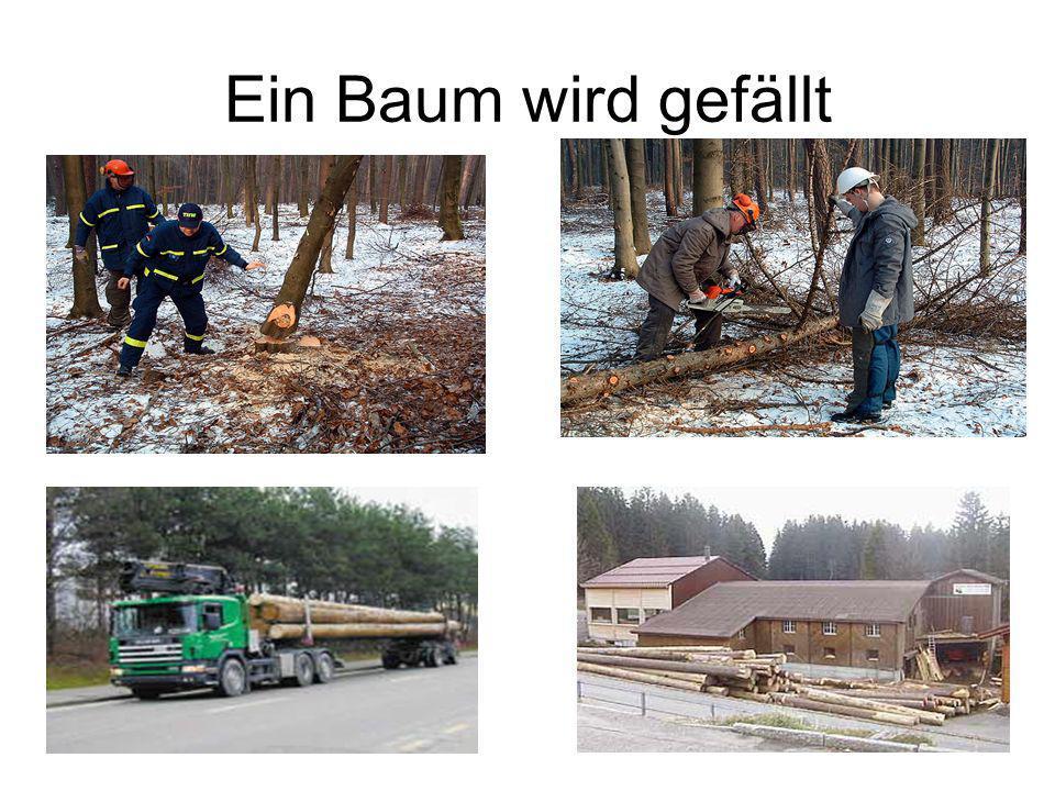 Verarbeitung von Holz