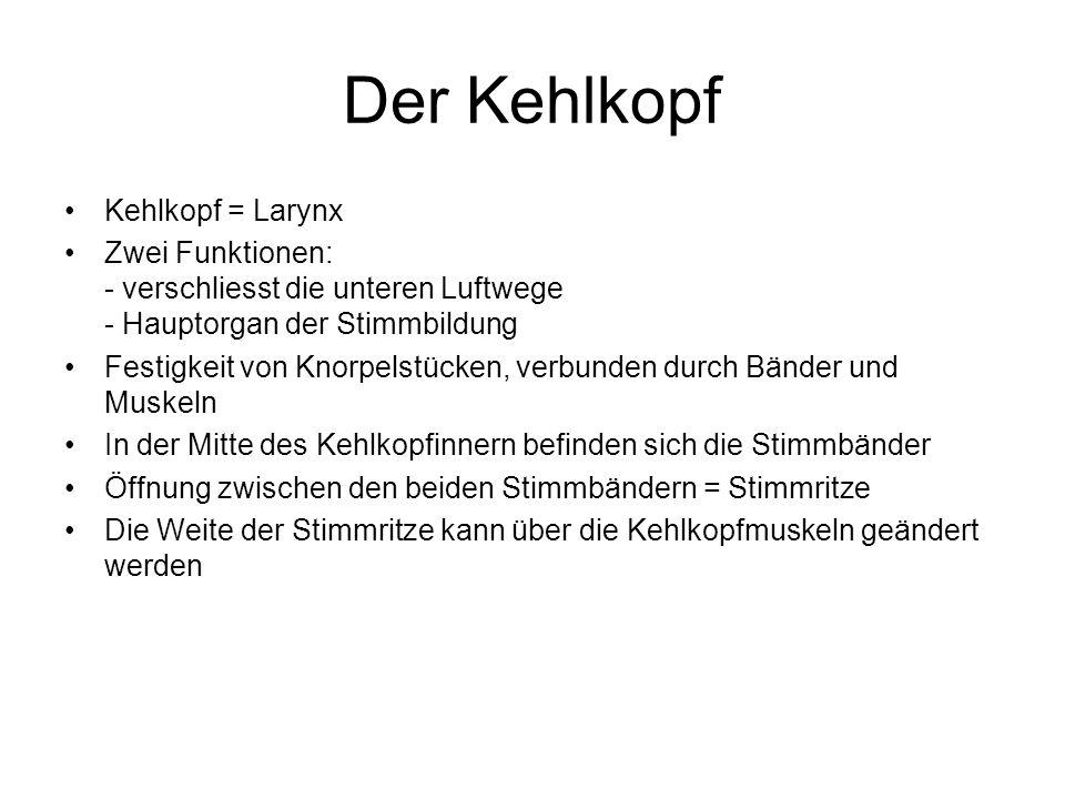 Der Kehlkopf Kehlkopf = Larynx Zwei Funktionen: - verschliesst die unteren Luftwege - Hauptorgan der Stimmbildung Festigkeit von Knorpelstücken, verbu