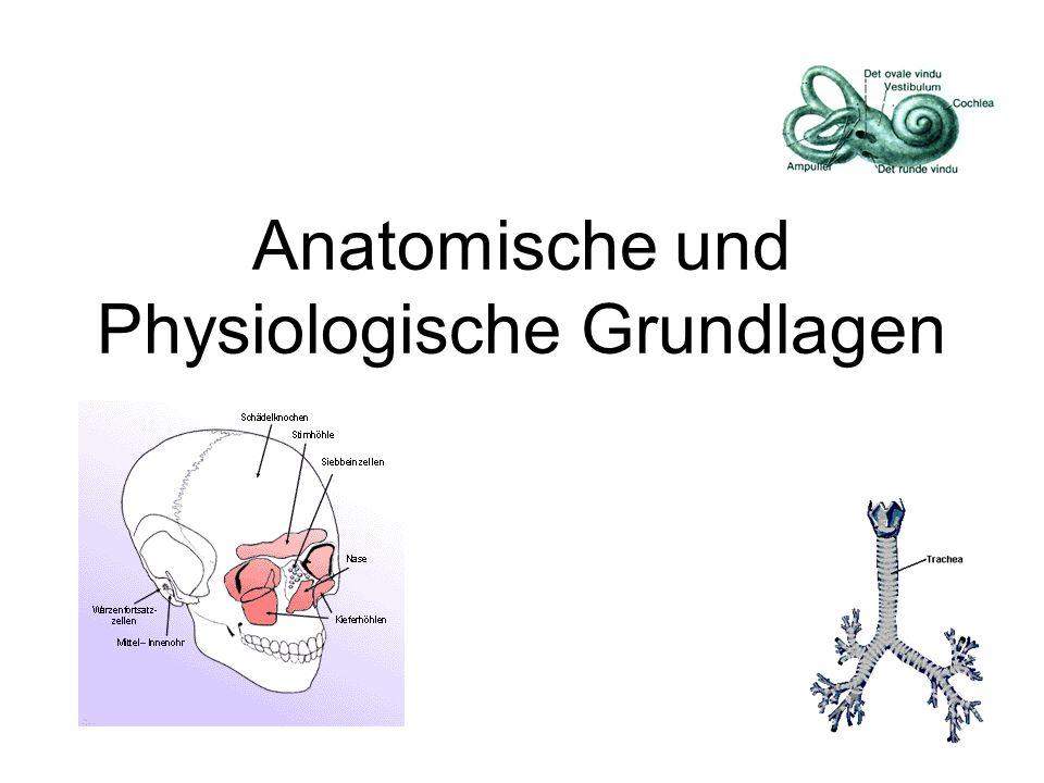 Anatomie des Ohres Stereohören, da 2 Ohren Hör- und Gleichgewichtsorgan Lage-, Bewegungs- und Drehsinn Einteilung in 3 Teile: - äusseres Ohr - Mittelohr - Innenohr Aussenohr Mittelohr Innenohr