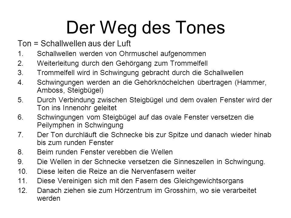 Der Weg des Tones Ton = Schallwellen aus der Luft 1.Schallwellen werden von Ohrmuschel aufgenommen 2.Weiterleitung durch den Gehörgang zum Trommelfell