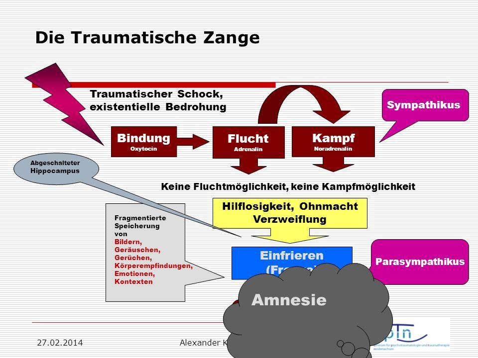 27.02.2014 Alexander Korittko, Hannover 4 Die Traumatische Zange Traumatischer Schock, existentielle Bedrohung Flucht Adrenalin Bindung Oxytocin Kampf
