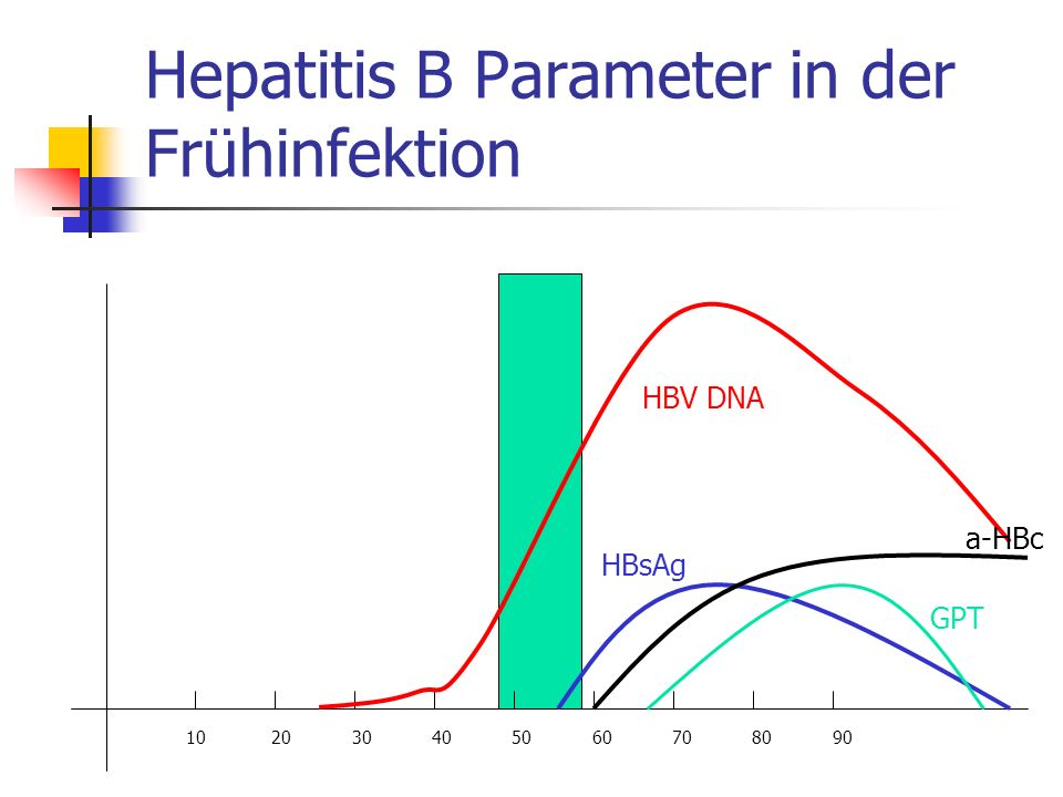 Hepatitis B Parameter in der Frühinfektion 10 20 30 40 50 60 70 80 90 HBV DNA a-HBc HBsAg GPT