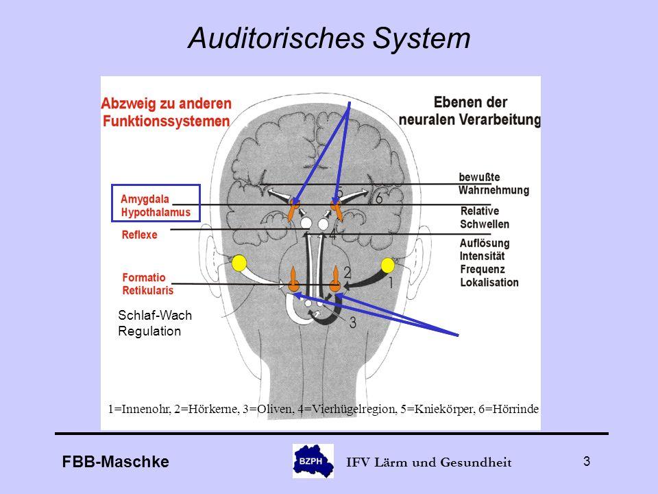 FBB-Maschke IFV Lärm und Gesundheit 3 Auditorisches System 1=Innenohr, 2=Hörkerne, 3=Oliven, 4=Vierhügelregion, 5=Kniekörper, 6=Hörrinde Schlaf-Wach R