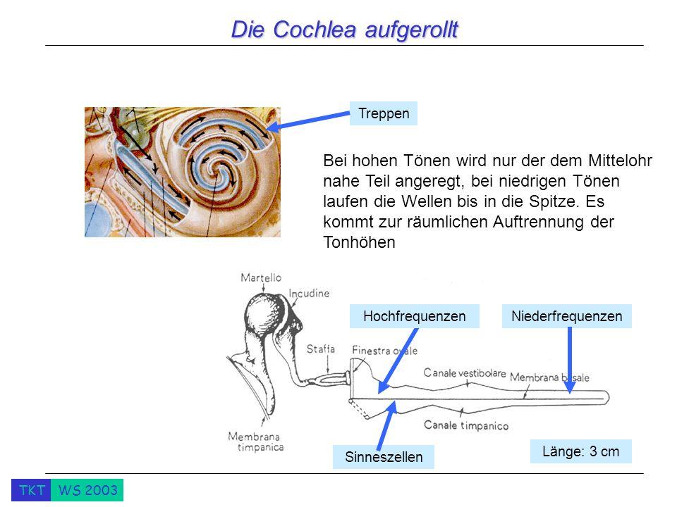 TKTWS 2003 Die Cochlea aufgerollt Treppen NiederfrequenzenHochfrequenzen Länge: 3 cm Bei hohen Tönen wird nur der dem Mittelohr nahe Teil angeregt, bei niedrigen Tönen laufen die Wellen bis in die Spitze.