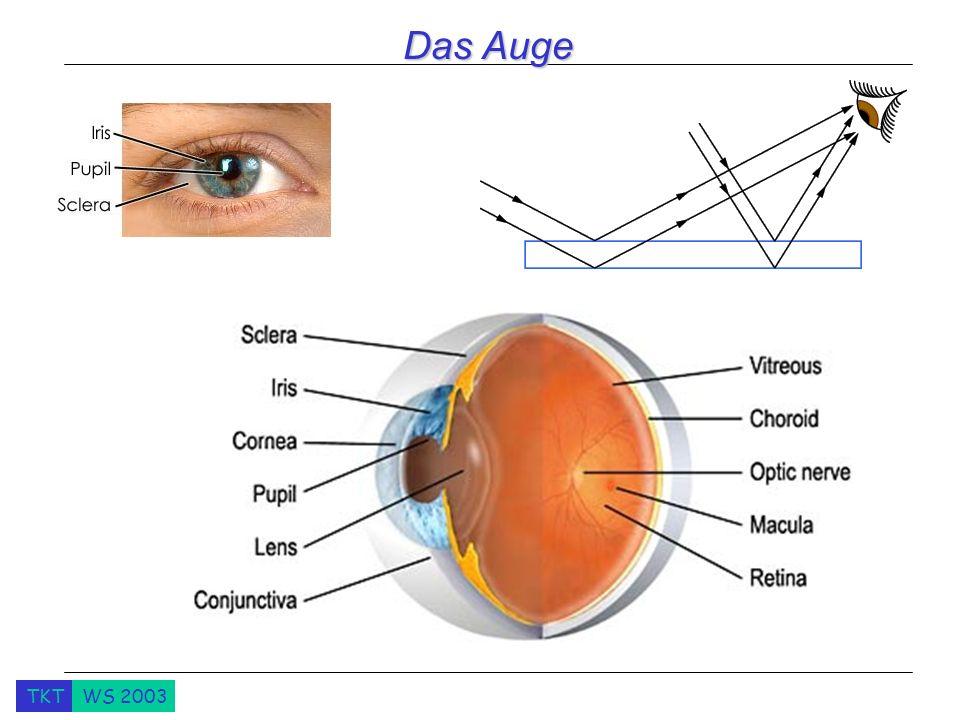 TKTWS 2003 Das Auge