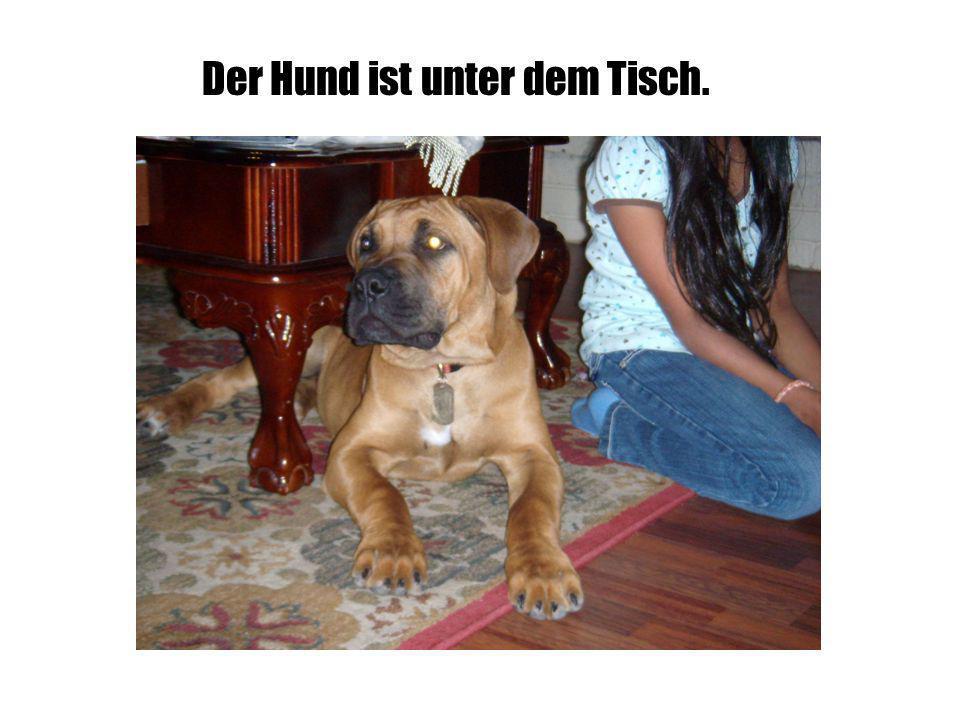Der Hund ist unter dem Tisch.