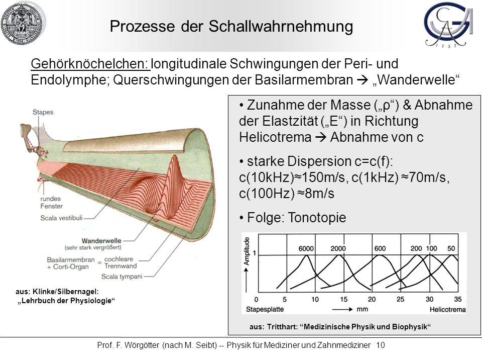 Prof. F. Wörgötter (nach M. Seibt) -- Physik für Mediziner und Zahnmediziner 10 Prozesse der Schallwahrnehmung Gehörknöchelchen: longitudinale Schwing