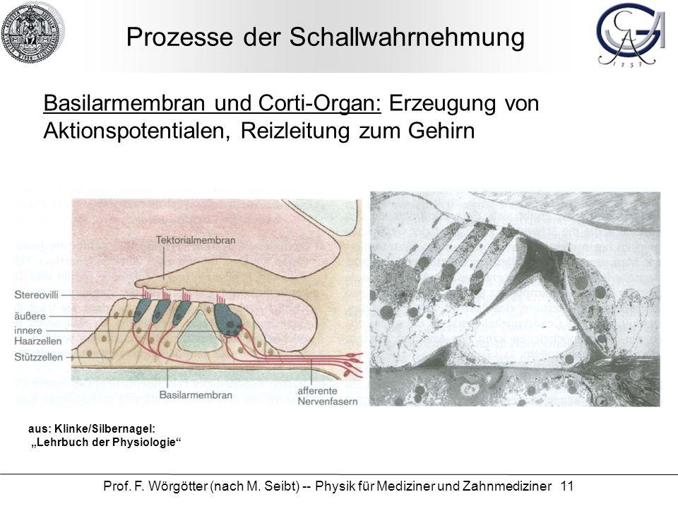 Prof. F. Wörgötter (nach M. Seibt) -- Physik für Mediziner und Zahnmediziner 11 Prozesse der Schallwahrnehmung Basilarmembran und Corti-Organ: Erzeugu
