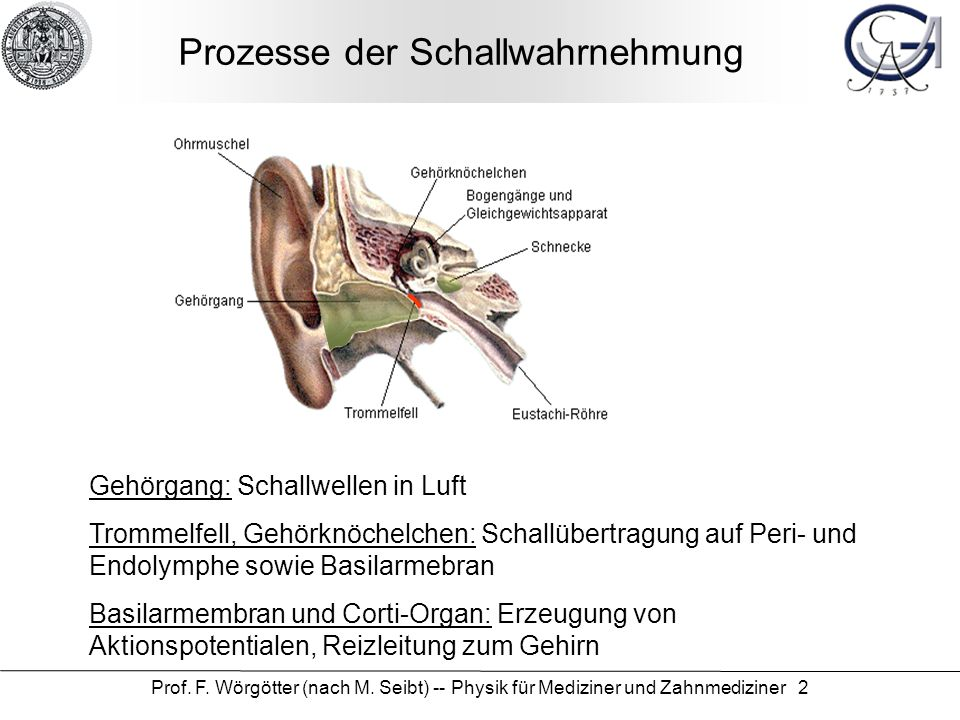 Prof. F. Wörgötter (nach M. Seibt) -- Physik für Mediziner und Zahnmediziner 2 Prozesse der Schallwahrnehmung Gehörgang: Schallwellen in Luft Trommelf