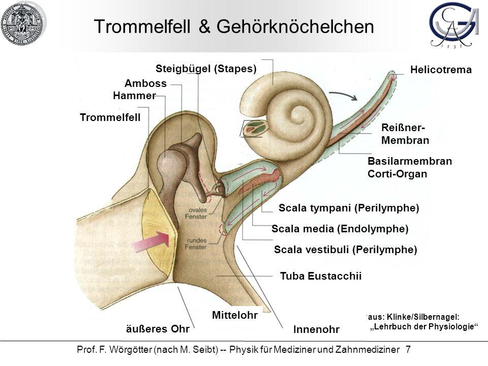 Prof. F. Wörgötter (nach M. Seibt) -- Physik für Mediziner und Zahnmediziner 7 Trommelfell & Gehörknöchelchen aus: Klinke/Silbernagel: Lehrbuch der Ph