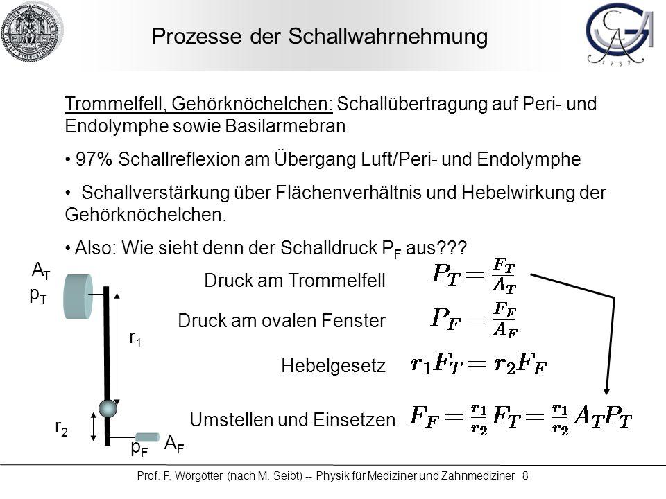 Prof. F. Wörgötter (nach M. Seibt) -- Physik für Mediziner und Zahnmediziner 8 Prozesse der Schallwahrnehmung Trommelfell, Gehörknöchelchen: Schallübe