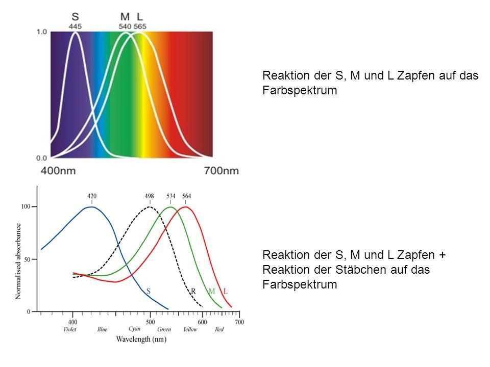 Reaktion der S, M und L Zapfen auf das Farbspektrum Reaktion der S, M und L Zapfen + Reaktion der Stäbchen auf das Farbspektrum