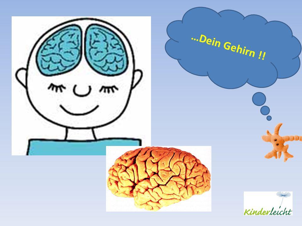 …Dein Gehirn !!