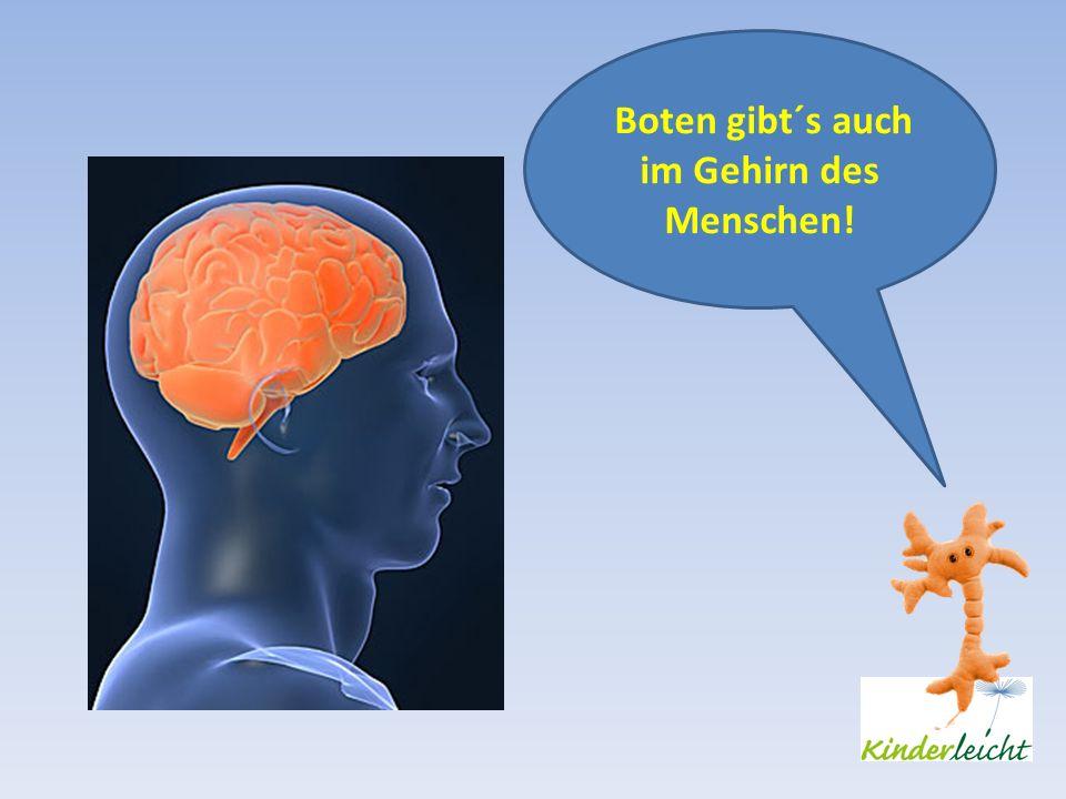 Boten gibt´s auch im Gehirn des Menschen!