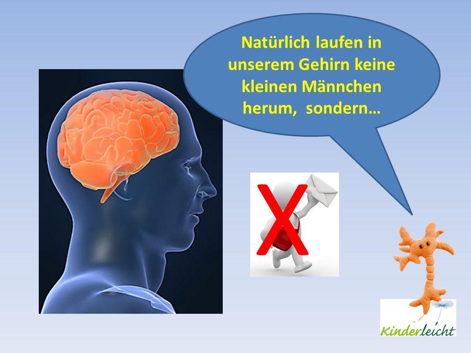 Natürlich laufen in unserem Gehirn keine kleinen Männchen herum, sondern…