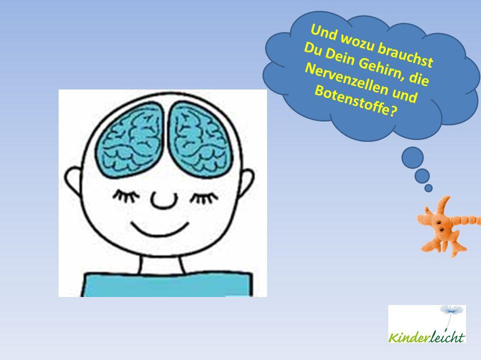 Und wozu brauchst Du Dein Gehirn, die Nervenzellen und Botenstoffe?