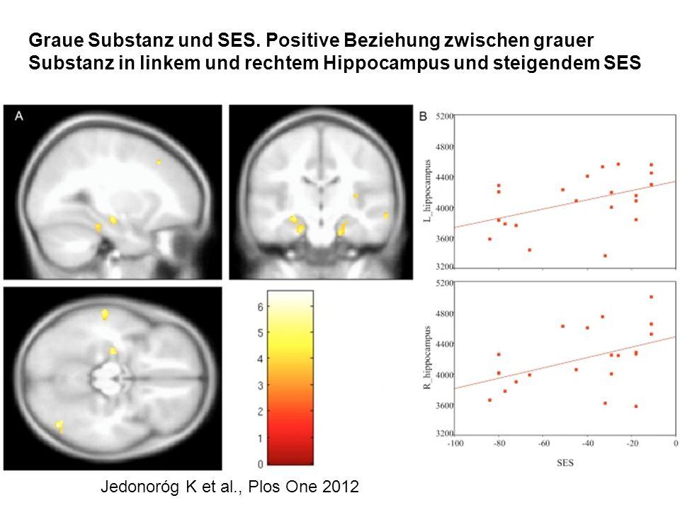 Jedonoróg K et al., Plos One 2012 Graue Substanz und SES. Positive Beziehung zwischen grauer Substanz in linkem und rechtem Hippocampus und steigendem