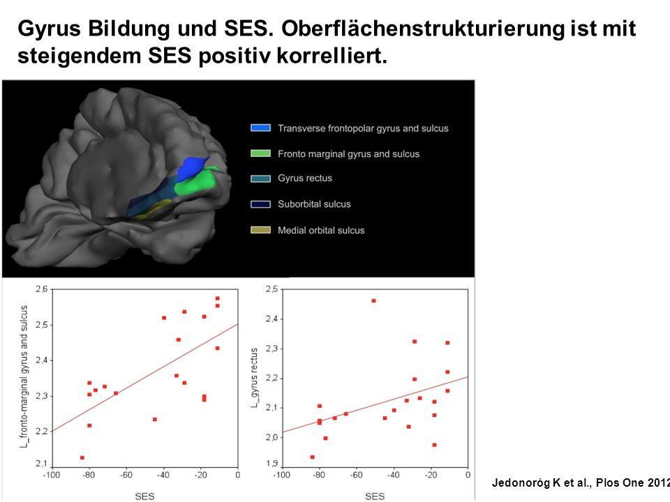 Jedonoróg K et al., Plos One 2012 Gyrus Bildung und SES. Oberflächenstrukturierung ist mit steigendem SES positiv korrelliert.