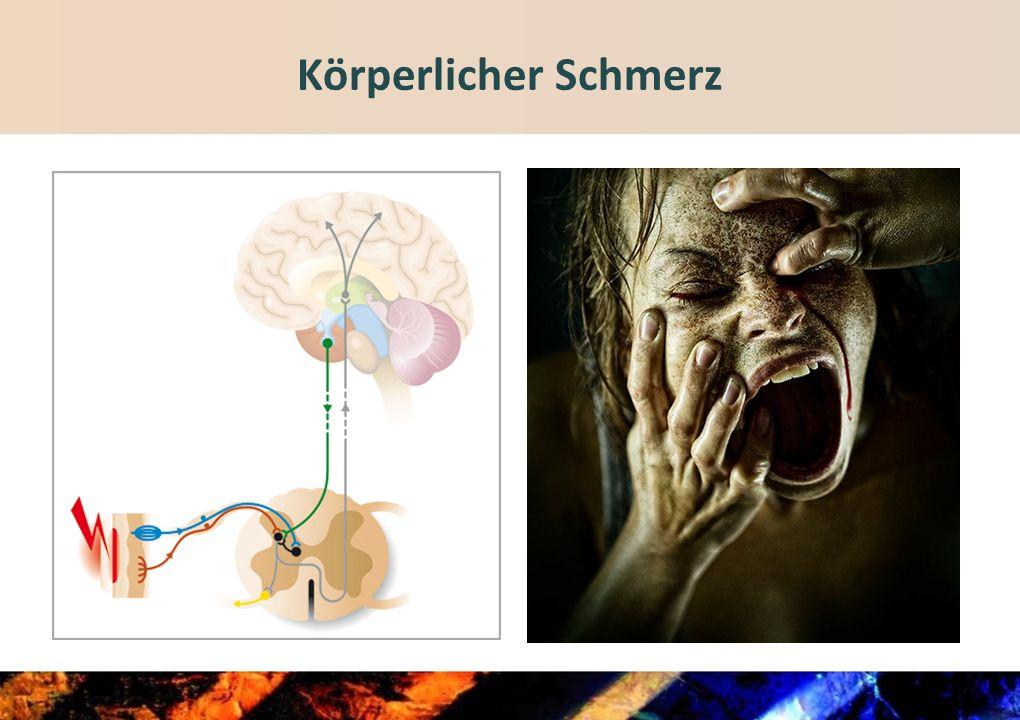 Therapie II Gestaltung des aktuellen Lebens und der Zukunft Behandlungsbedürftigkeit von Begleiterkrankungen klären (z.B.