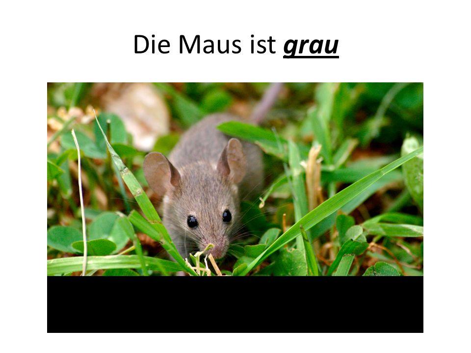 Die Maus ist grau