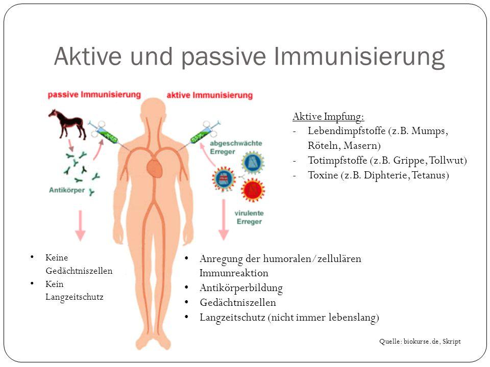Aktive und passive Immunisierung Quelle: biokurse.de, Skript Aktive Impfung: -Lebendimpfstoffe (z.B.