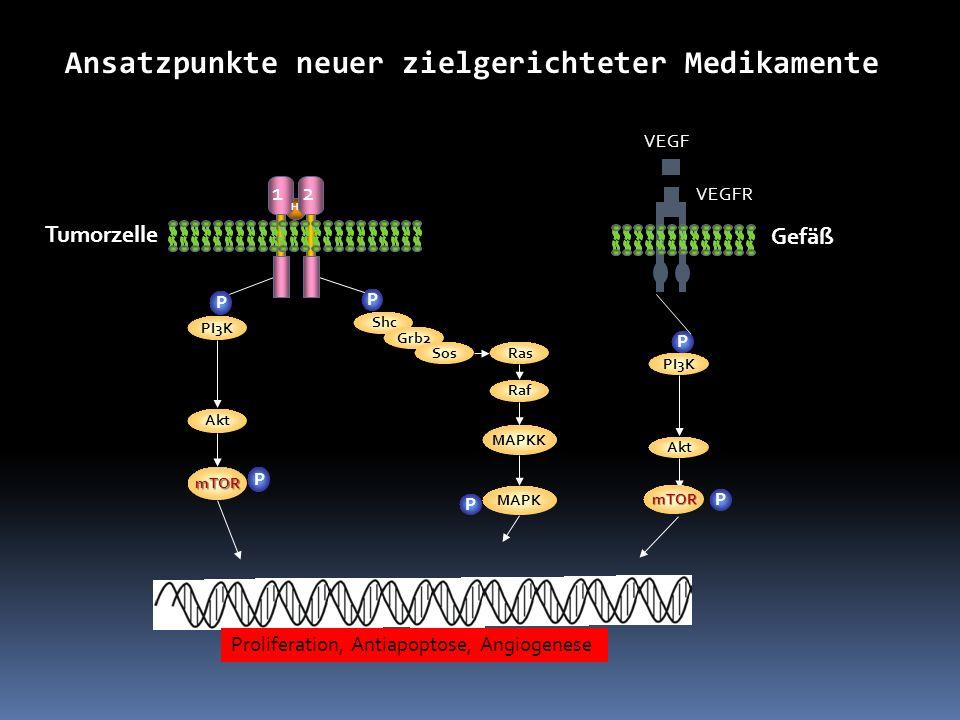 Proliferation, Antiapoptose, Angiogenese P Shc Grb2 SosRas Raf MAPKK MAPK P P PI3K Akt mTOR P 21 H Ansatzpunkte neuer zielgerichteter Medikamente Tumo