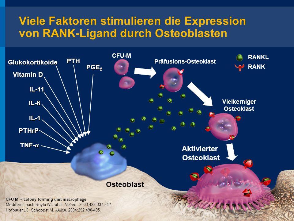 Osteoblast Aktivierter Osteoklast TNF- TNF- PTH IL-1 PTHrP Glukokortikoide Vitamin D PGE 2 IL-11 RANKL RANK Modifiziert nach Boyle WJ, et al. Nature.
