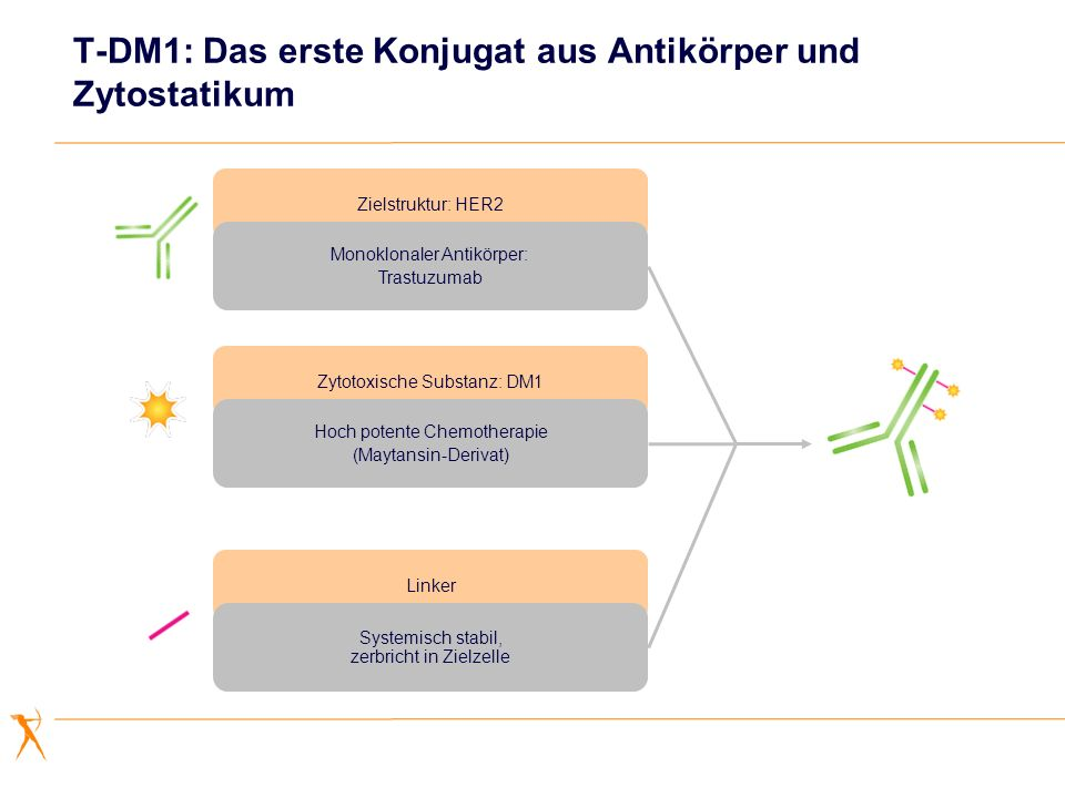T-DM1: Das erste Konjugat aus Antikörper und Zytostatikum Zielstruktur: HER2 Monoklonaler Antikörper: Trastuzumab Zytotoxische Substanz: DM1 Hoch pote