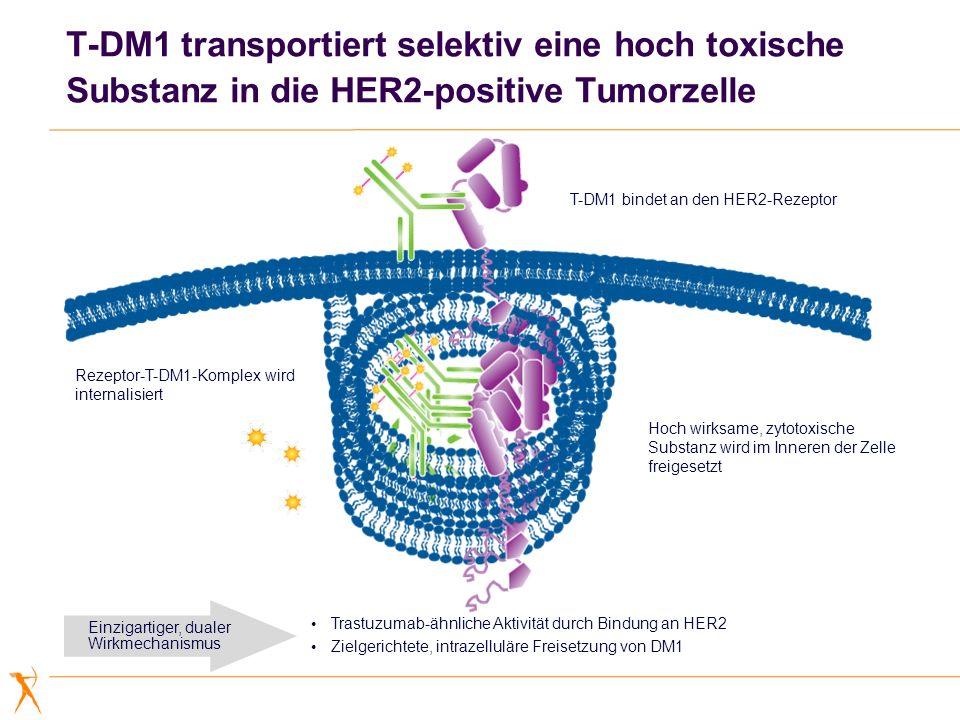 T-DM1 bindet an den HER2-Rezeptor Rezeptor-T-DM1-Komplex wird internalisiert Hoch wirksame, zytotoxische Substanz wird im Inneren der Zelle freigesetz