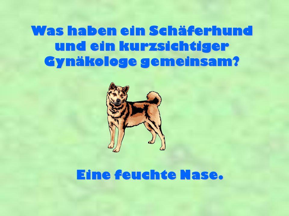 Was haben ein Schäferhund und ein kurzsichtiger Gynäkologe gemeinsam? Eine feuchte Nase.