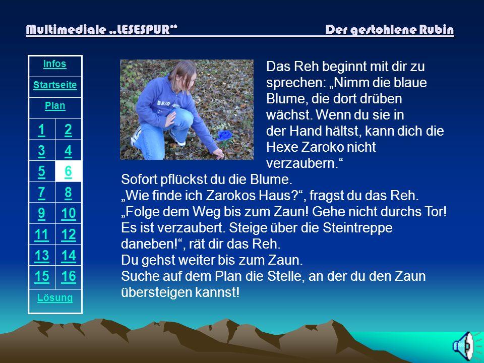 Multimediale LESESPUR Der gestohlene Rubin Infos Startseite Plan 12 34 56 78 910 1112 1314 1516 Lösung Das Reh beginnt mit dir zu sprechen: Nimm die blaue Blume, die dort drüben wächst.