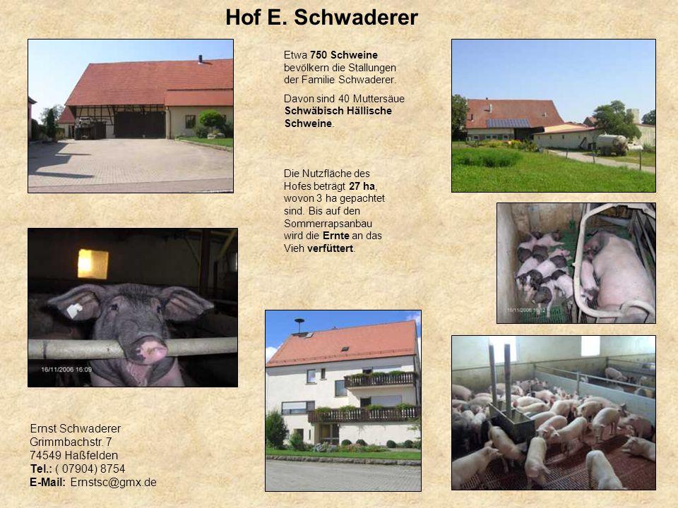 Hof E. Schwaderer Etwa 750 Schweine bevölkern die Stallungen der Familie Schwaderer. Davon sind 40 Muttersäue Schwäbisch Hällische Schweine. Die Nutzf