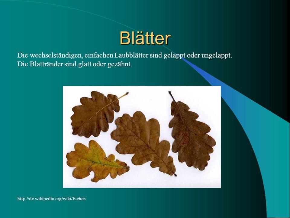 Blätter Die wechselständigen, einfachen Laubblätter sind gelappt oder ungelappt. Die Blattränder sind glatt oder gezähnt. http://de.wikipedia.org/wiki