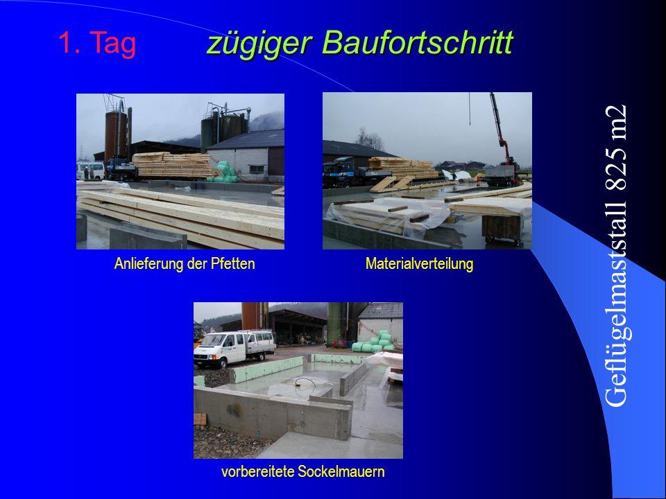 zügiger Baufortschritt 1. Tag Anlieferung der PfettenMaterialverteilung vorbereitete Sockelmauern Geflügelmaststall 825 m2