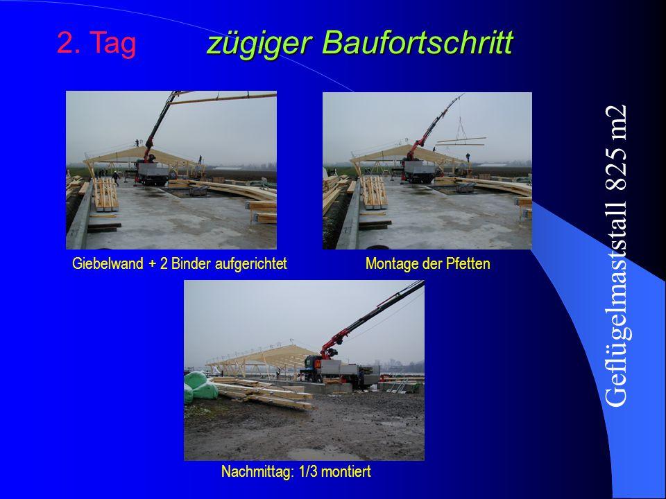 zügiger Baufortschritt 2. Tag Giebelwand + 2 Binder aufgerichtetMontage der Pfetten Nachmittag: 1/3 montiert Geflügelmaststall 825 m2