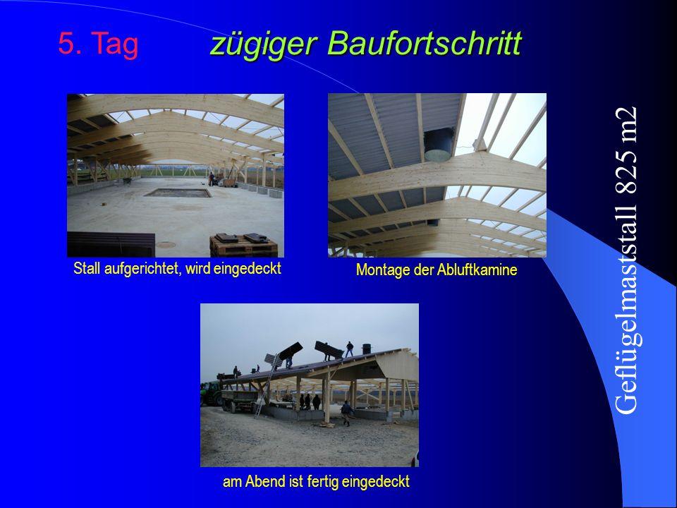 zügiger Baufortschritt 5. Tag Stall aufgerichtet, wird eingedeckt am Abend ist fertig eingedeckt Montage der Abluftkamine Geflügelmaststall 825 m2