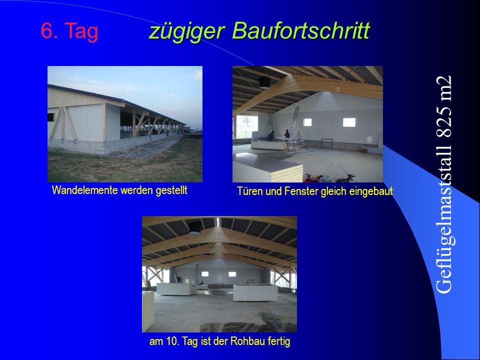 zügiger Baufortschritt 6. Tag Wandelemente werden gestellt am 10. Tag ist der Rohbau fertig Türen und Fenster gleich eingebaut Geflügelmaststall 825 m