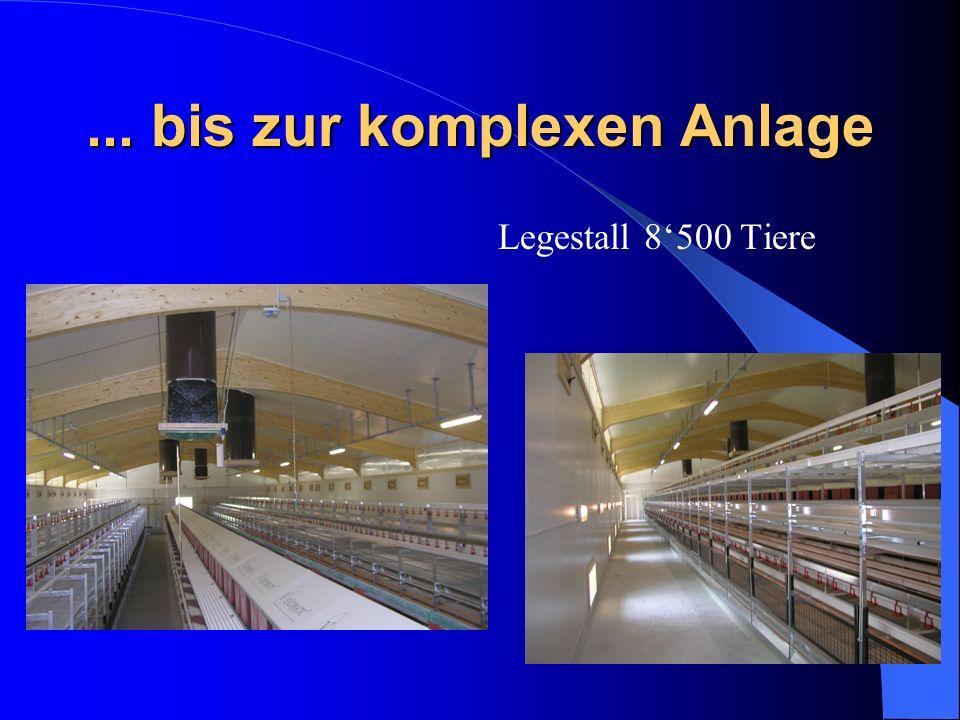 ... bis zur komplexen Anlage Legestall 8500 Tiere